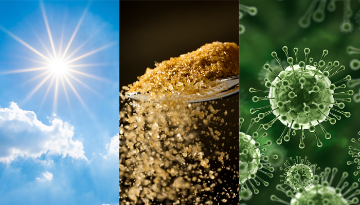sunlight sugar bacteria