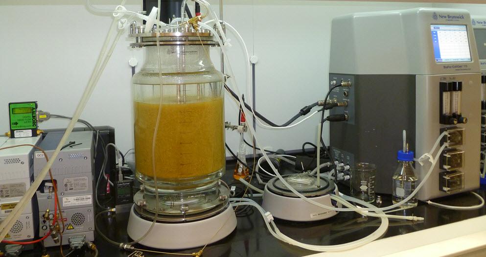 hydrogen yeast 1