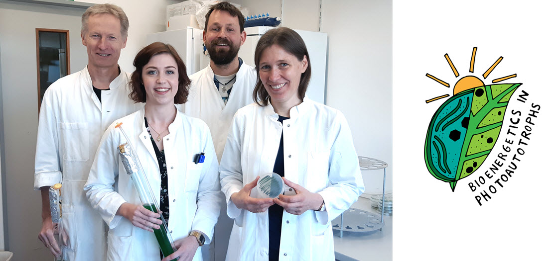 Kiel research team investigates how cyanobacteria can be transformed into hydrogen factories1