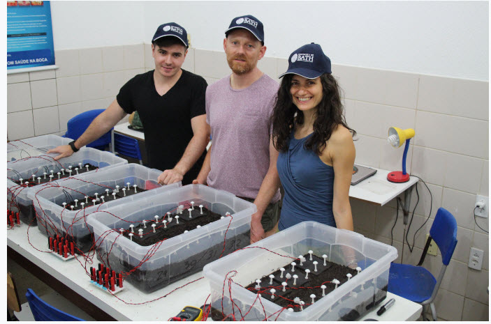 Soil Powered Fuel Cell Promises Cheap Sustainable Water Purification 2