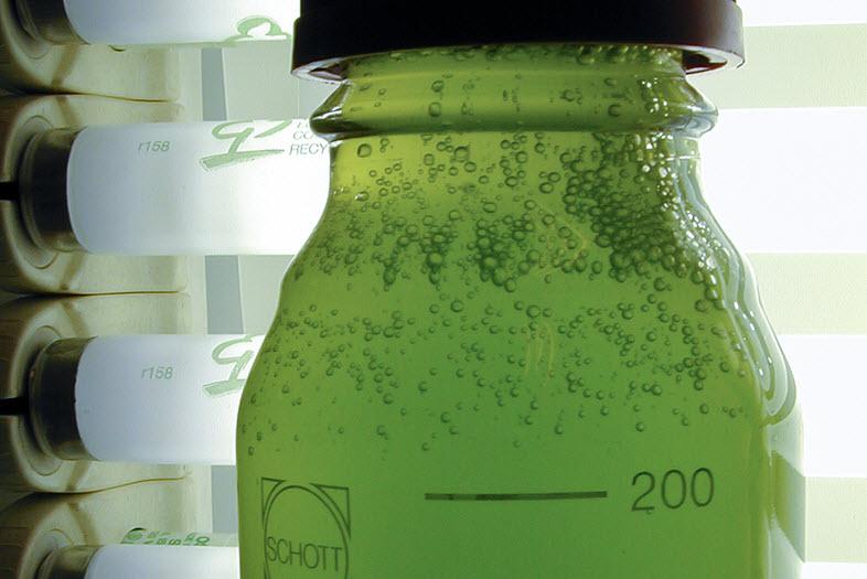 Tin and Algae Fuel Cells