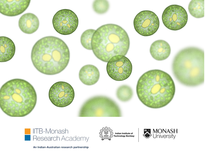 fuelcellsworks, Microalgae Identified as Clean Source of Hydrogen Production: Monash Study